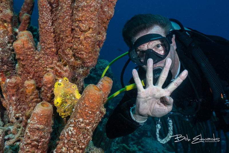 Tim's 400th dive