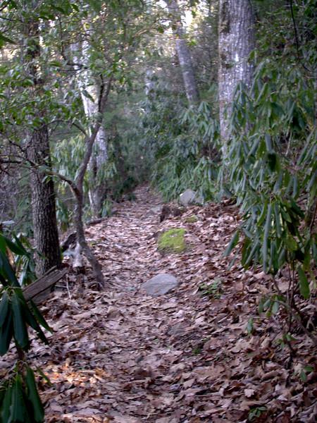 Art Loeb Trail - 4,120'