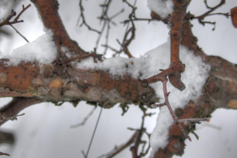 Easy Pickins Winter 017-1676784153-O.jpg