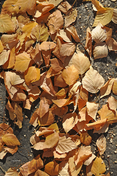 corn flakes 1-13-2012.jpg