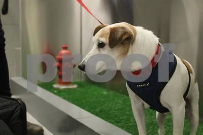 weelief-dogs-get-airport-bathrooms-of-their-own