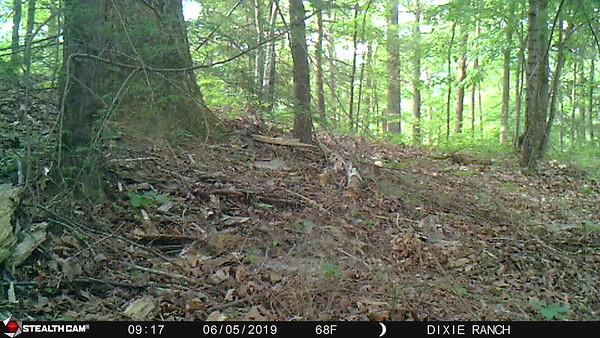 Dixie Way Trail Cam