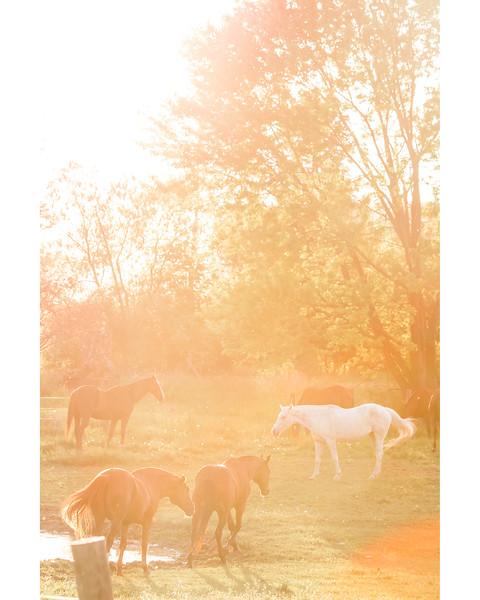 HorseSun1_Border.jpg