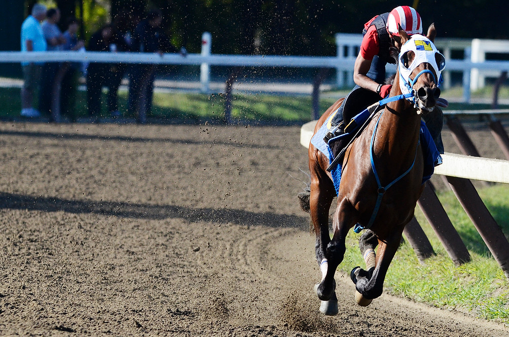 . Jockey Jose Ortiz breezed Moreno, trained by Eric Guillot, on Saturday morning at the Main Track on the Saratoga Race Course, set to run in the Travers. Photo Erica Miller 8/17/13 Moreno1