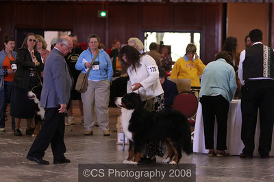 Bred by Exhibitor Dog-BMDCA 2009