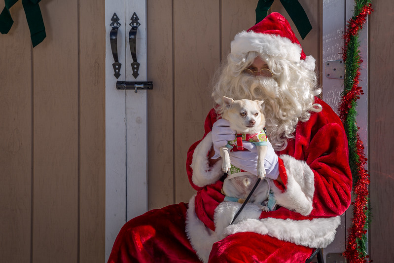 Pet Pictures With Santa-94.jpg