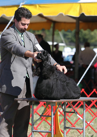Warrenton Kennel Club - October 2, 2010