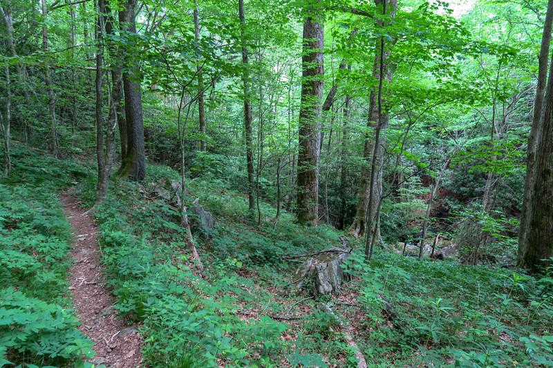 Greasy Cove Trail -- 4,280'