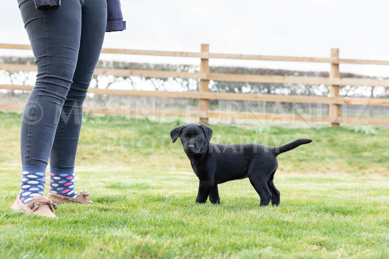 Weika Puppies 24 March 2019-8779.jpg