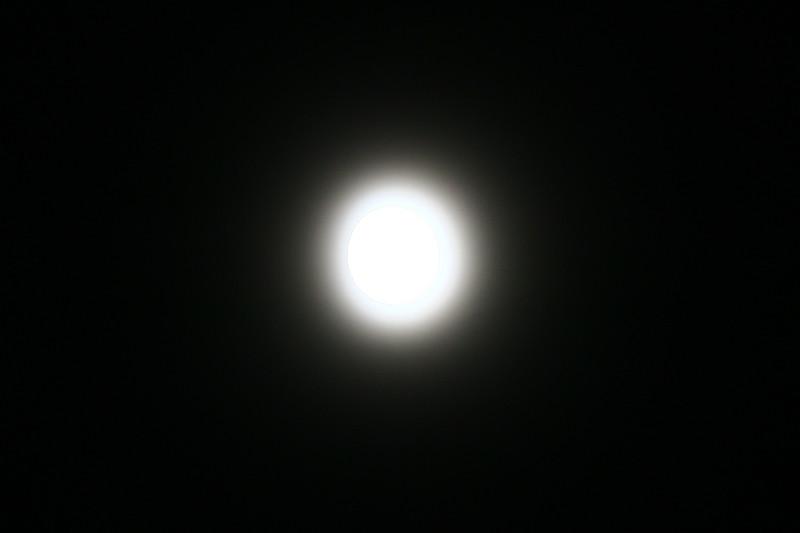 SHAY9667.JPG