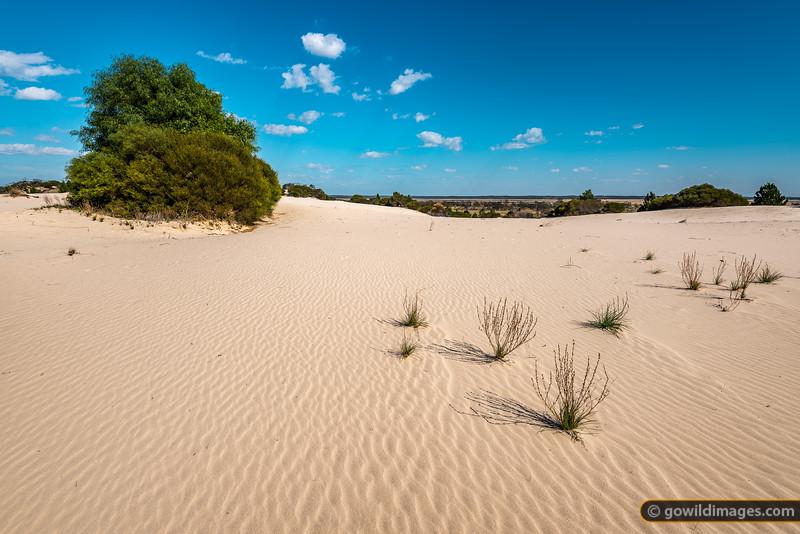 Sandy Plains