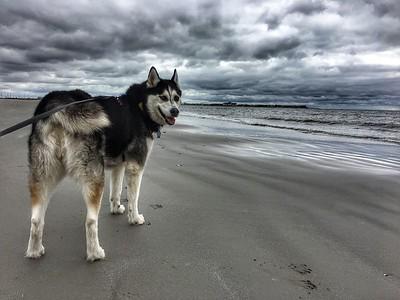 Dog Beach - 6-7-17