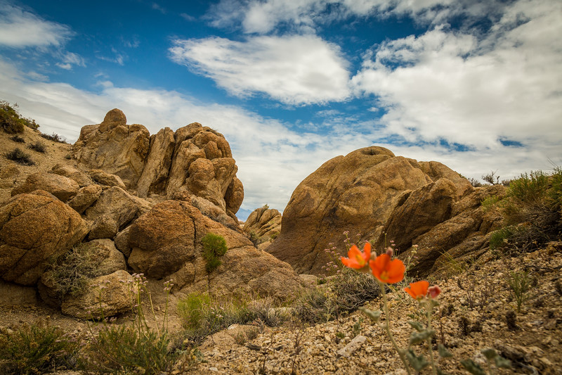 Alabama Hills Flowers