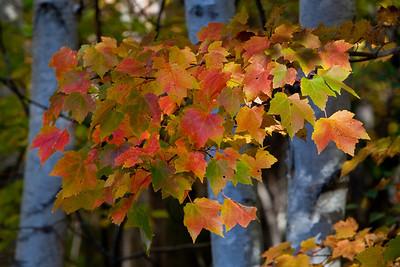 Maine Fall 2009