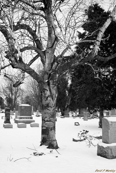 Timeless Tree