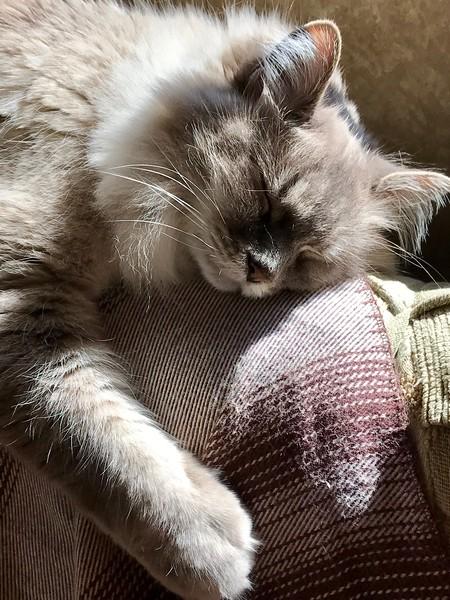 BARNIE THE CAT