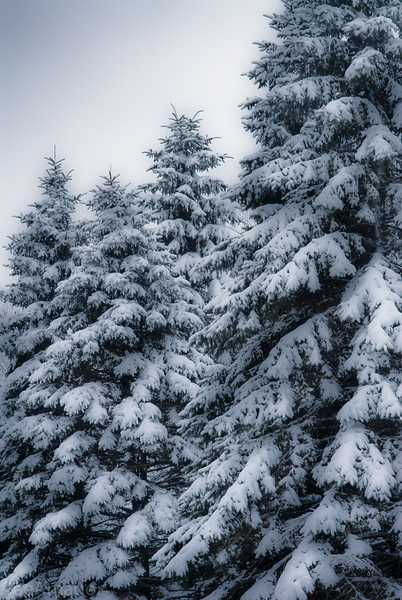 Winter Wonderland in Vermont-16.jpg