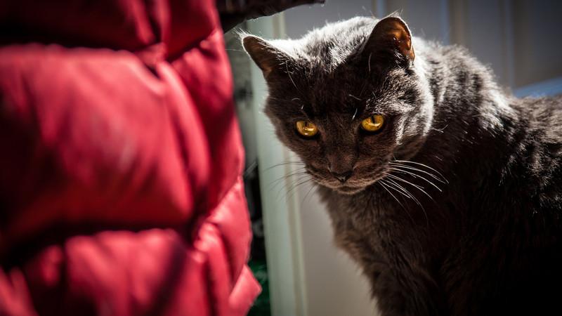 cats-feb-2013-9.jpg