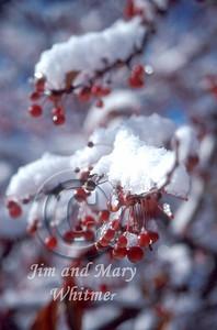 Snow_029