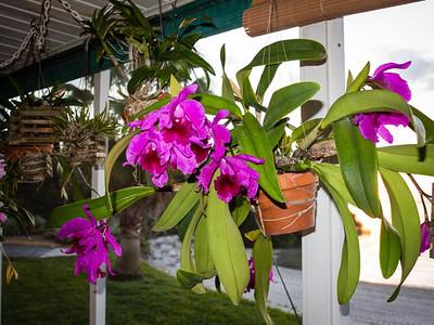 Russ' Orchids 2013