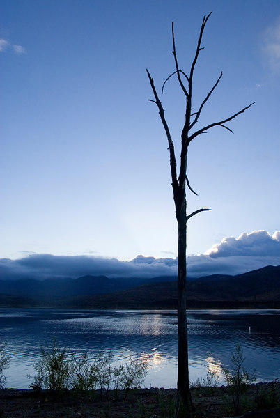 Dead tree on the dawn of a new day