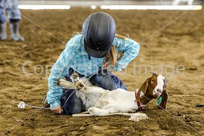 Goat Tail Tying