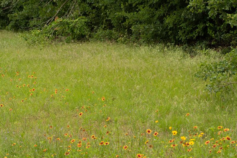 Prairie View 1 May 2020-04892.jpg
