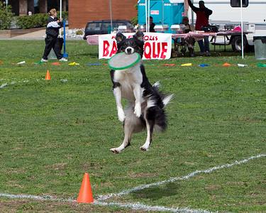 Dog Frisbee - 2010
