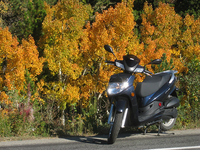 But they are THIS YEAR'S Fall colors (2009)