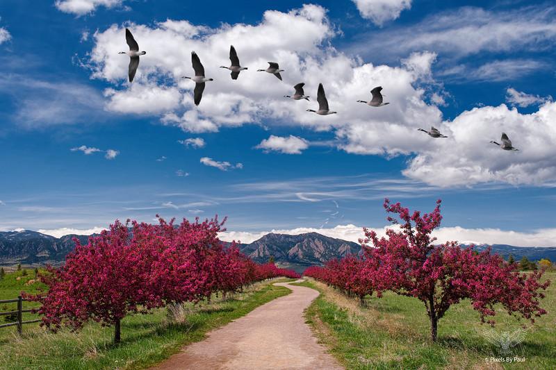 001-Davidson Mesa Spring.jpg