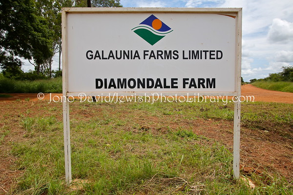 ZAMBIA, Lusaka. Galaunia Farms Limited (owned by the Galaun family) (2.2013)
