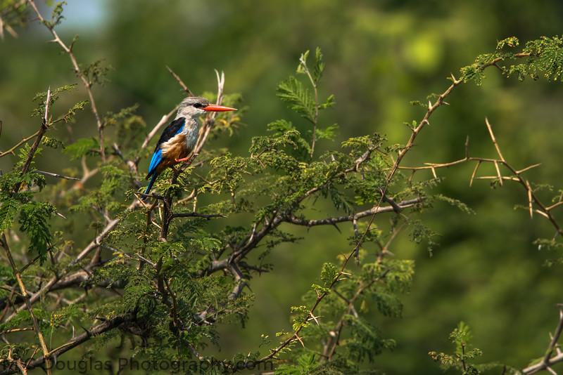 African Wildlife-51.jpg