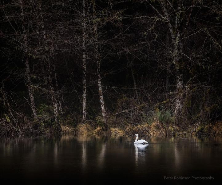 SwanLake-PortRenfrew.jpg