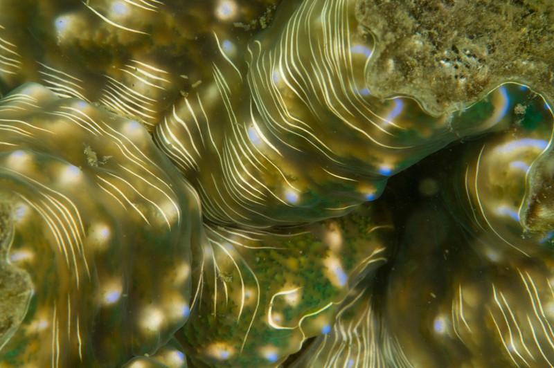 clam-4944.jpg