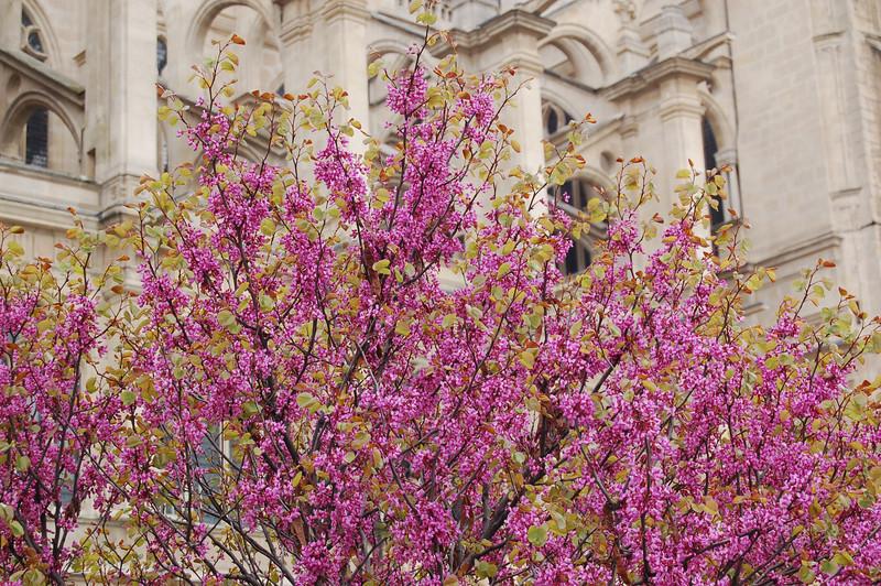 Springtime in Paris!