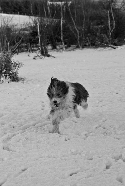 Snow Dog-0009