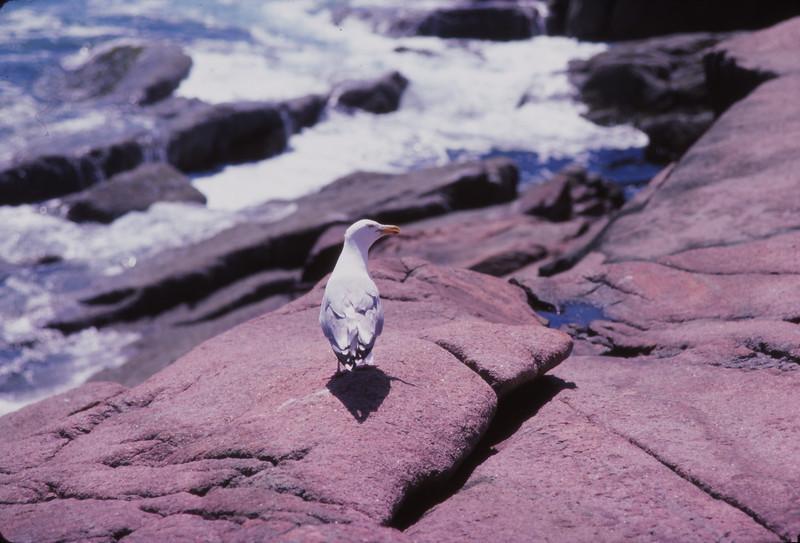 Nova Scotia 1983 - 078.jpg