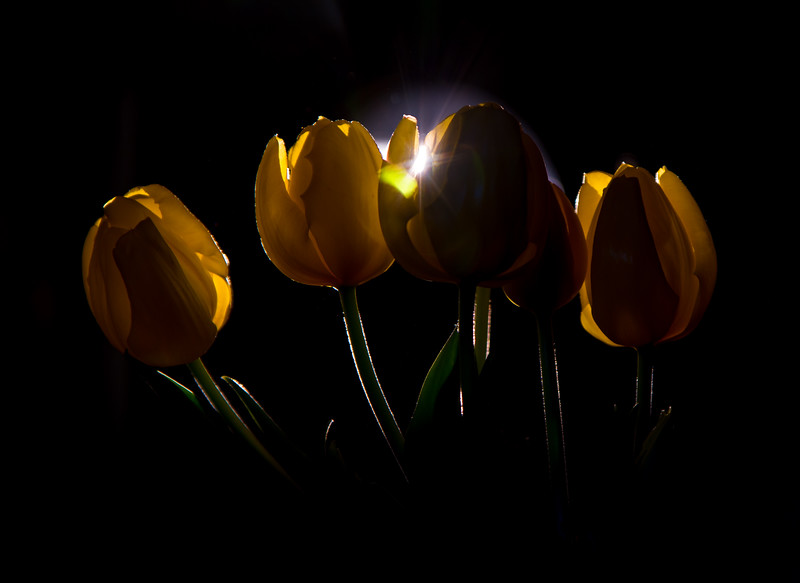 Backlit yellow flower-3091-3091.jpg