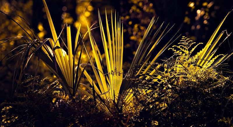 The Magic of Light-386.jpg