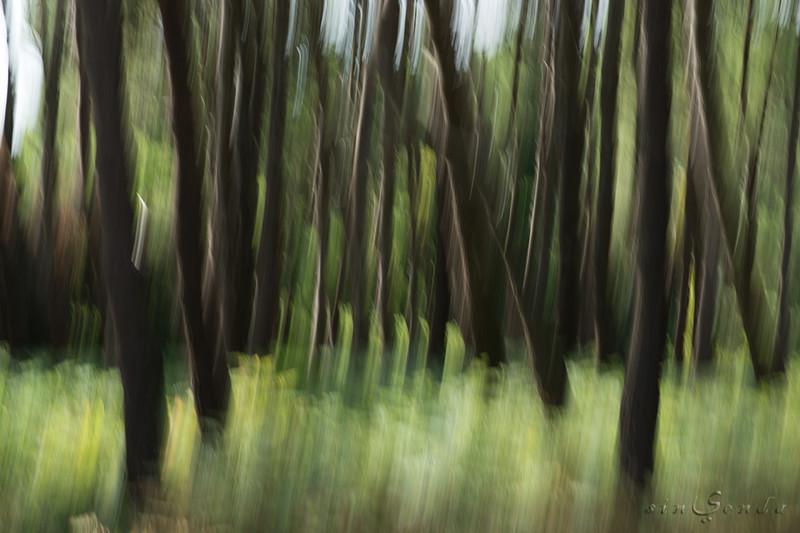 Espíritus del bosque. Brocéliande I