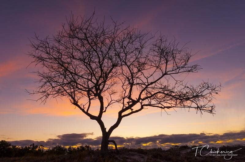 Barrier Island Tree Sunrise-1510414464669.jpg