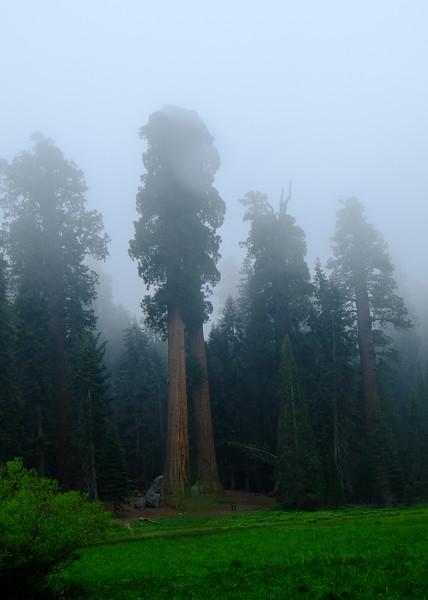 California Day 6 Sequoia 05-30-2017 119.JPG