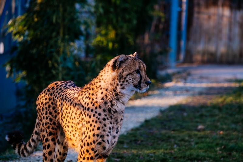 Tonis Zoo-0269.jpg