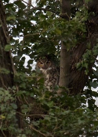2018 Owls