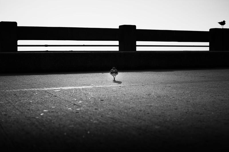 Skyway bridge birds-1.jpg