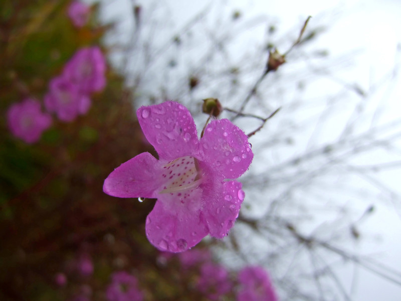 myakka_20111028_2248.jpg