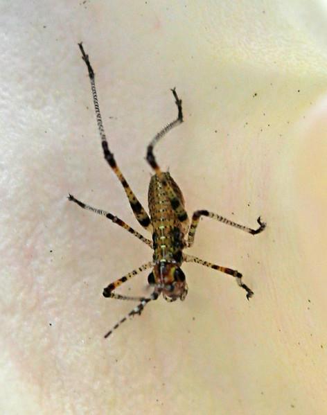 6983 Tiny Bug.jpg
