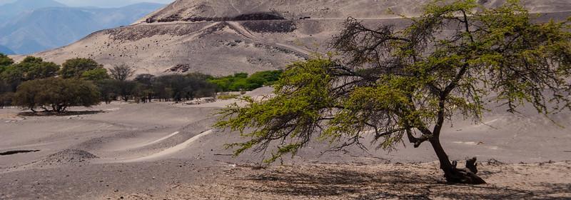 Nazca-36.jpg