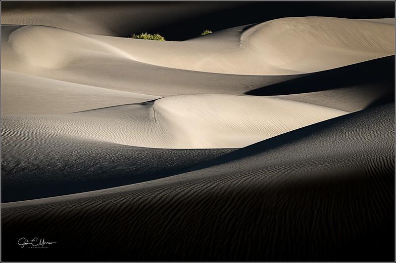 s73_0641 Dunes Plant b LPr2W.jpg