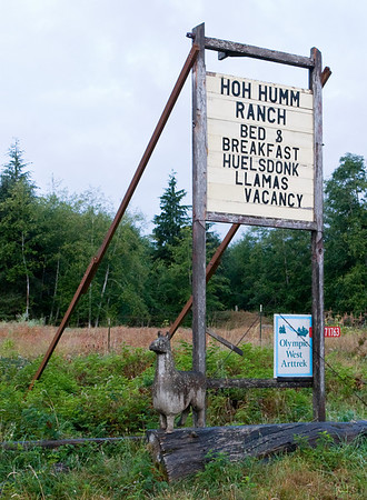 Hoh River Rainforest, Olympic Peninsula, Aug 2005